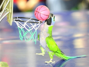 .com/pictures/funny-bird-pictures/funny-parrot-pictures/sports-parrot ...