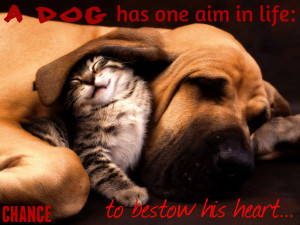 Funny Cats And Dogs With Sayings