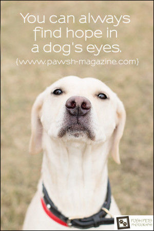 Inspirational Dog Quotes | AS DOGS WOULD SAY: DOG QUOTE #10 | Pawsh ...