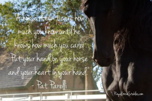 Horse Doent Care How Much You Know Until He Knows How Much You Care