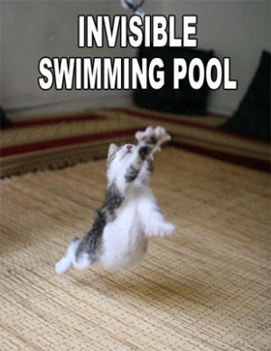 007894 funny animal sayings wallpaper cat invisible swimming pool.jpg ...