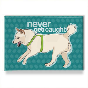 Cream-Shiba-Inu-Refrigerator-Magnets-with-Funny-Sayings-Never-Get ...