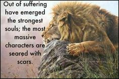 Out of Suffering quotes positive quotes animals quote strong lion ...