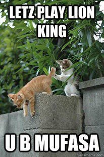 lionking funny pictures