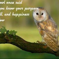 positive quotes photo: owl owl.jpg