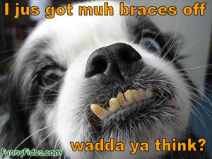 dog teeth braces