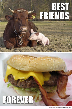 ... Quotes Funny Animal Pictures Quotes The Best Friend Is The Cow awesome