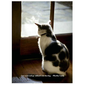 Cat Quote Sympathy Card