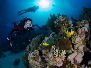 Jackfish Alley is one of the musts during your diving holiday in the ...