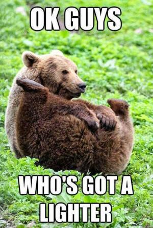 Funny animal captions - part 16 (30 pics), animal pics with captions ...