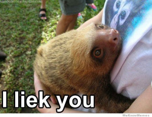 30 Greatest Sloth Memes, Gifs, And Comics