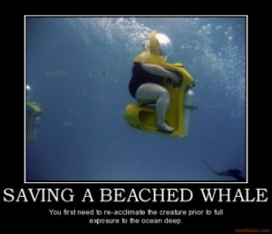 saving-a-beached-whale-whales-big-beached-demotivational-poster ...