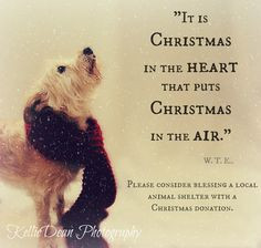 senior pet adopt shelter christmas quote snow scarf more dogs quotes ...
