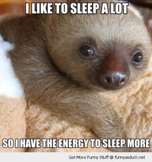 cute baby sloth animal sleep a lot energy more funny pics pictures pic ...