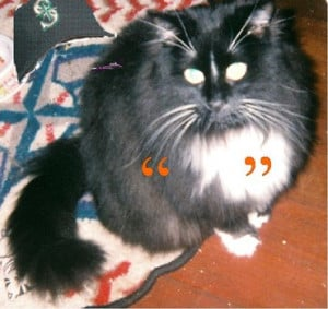 Spokane cat club reviews famous cat quotes