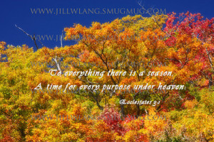 Autumn quotes, life quotes, halloween quotes, love quotes, autumn ...