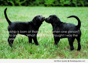 friendship quotes quotes about dogs cute and dog quotes pictures
