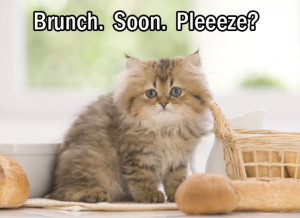 Cat Wants Brunch eCard