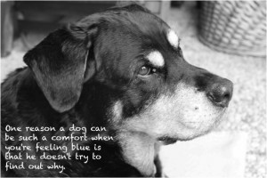 Dog Quotes On Nice Photographs