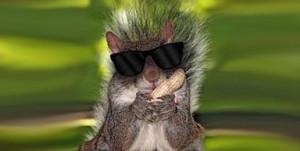 Blind Squirrel Finds a Supreme Court Nut