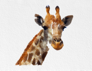 ... Giraffe Sayings , Cute Giraffe Sayings , Giraffe Quotes , Giraffe Puns