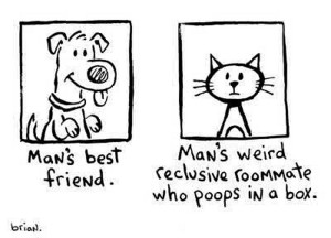 Dogs vs. Cats: And Why Dogs Are Better