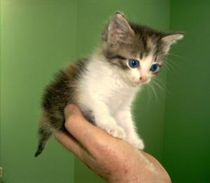 Cute Kittens so cute.....