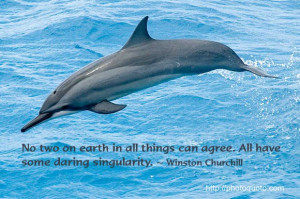 Dolphin Sayings