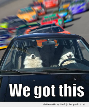 When Animals Are Allowed To Drive