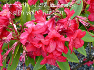 Flowers in bloom, with a quote
