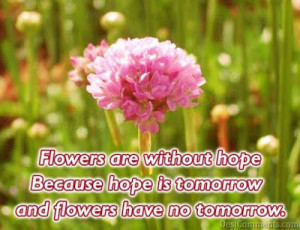 Flowers quotes , famous quotes, beauty quotes , quotes on flowers ...