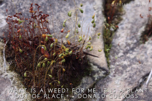 What is a weed? I have heard it said there are sixty definitions. For ...