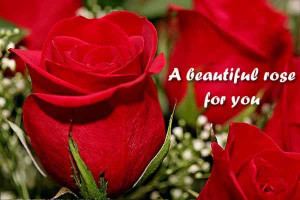 Beautiful Roses For You
