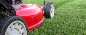 Brook Lawn Service offers grass cutting services