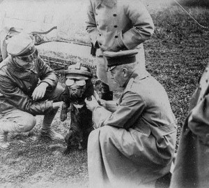 Favorite Great War Animal Photos (Non-Equine)