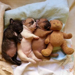 Snuggle Puppies