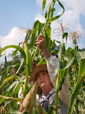 Colonial Tobacco Farming