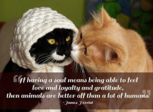 21 Great Quotes about Pets — After reading these quotes you will ...
