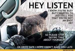 ... RE NOT AN IDIOT OK?,funny pictures,auto,bear,animals,car,cute,cheerful