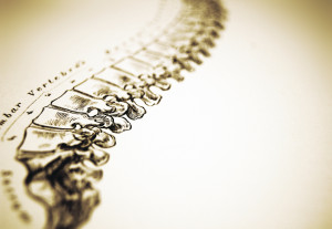... spinal brain' – the spinal cord's innate intelligence and