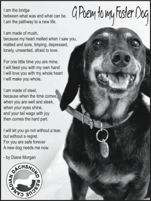 poem written from the perspective of a foster mom to her foster dog ...