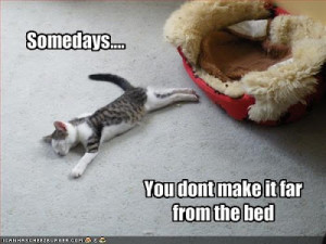 funny_cats_with_funny_sayings_2.jpg