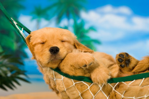 Dog days of summer » puppy in hammock (Charles, Mann © Charles, Mann ...