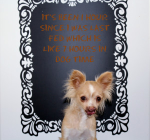 Toothless dog posing with a quote