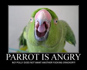 Funny Parrot & Bird Jokes