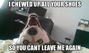 chewed up all your shoes