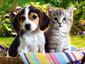 Kitten and Puppy hd Wallpapers 2013