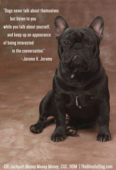 ... Quote of the Day - featuring French Bulldog CH. Jackpot! Money Money