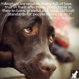 Alfred A. Montapert Dog Quote