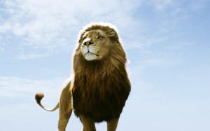 Aslan in Narnia HD Wallpaper #5254